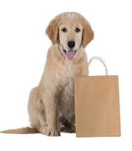 Dog Walks Tidworth